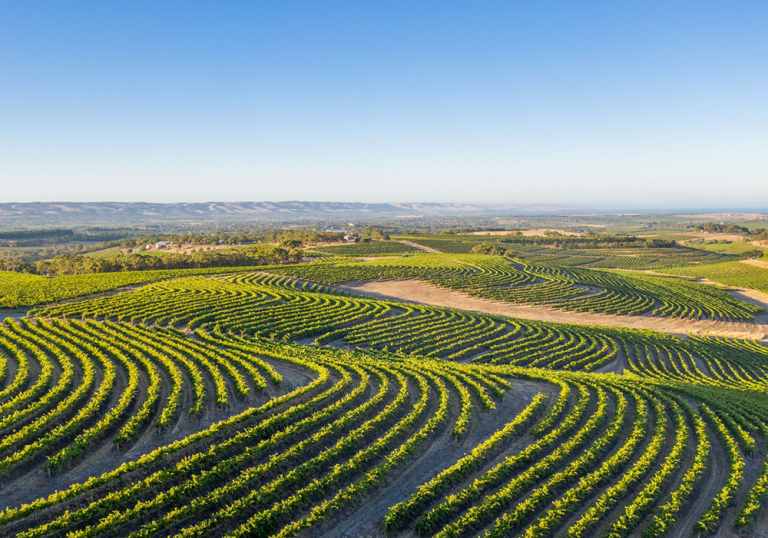 Overlooking the vineyards at McLaren Vale on a sunny morning